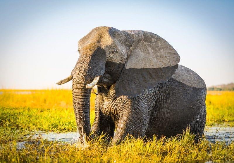chobe national park africa