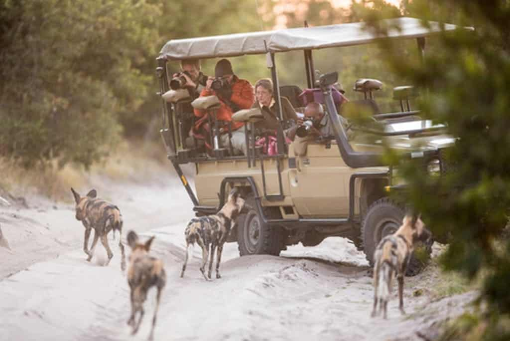 Wild Dogs, Moremi