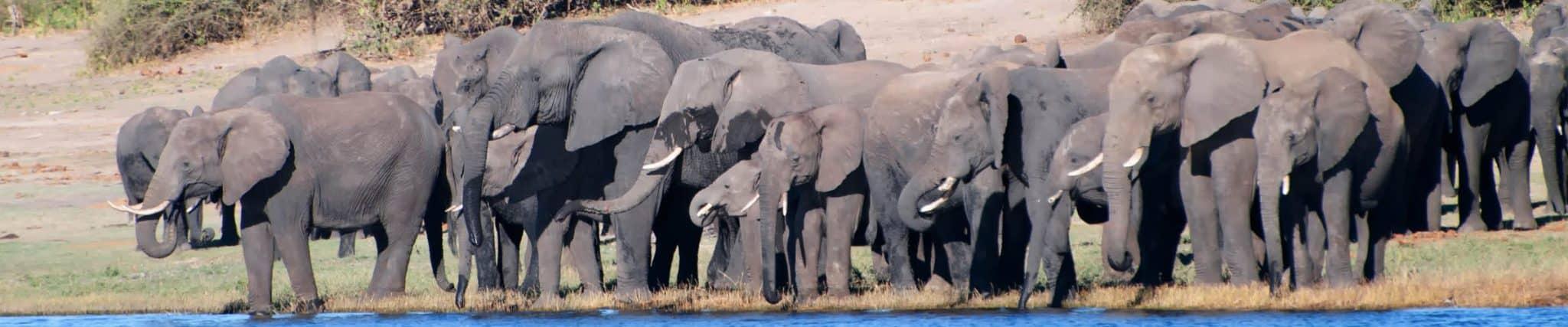 botswana elephants chobe